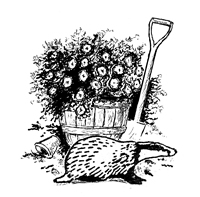 Many people are delighted and welcome badgers when they visit their garden, but on occasions lawns and plants can be damaged to the disappointment and ...